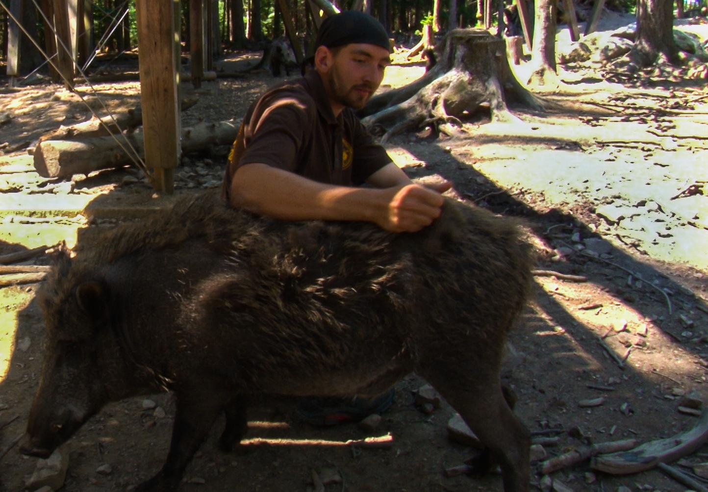 Die Tiere genießen die Streicheleinheiten von Tierpfleger Tobias Lindemann.