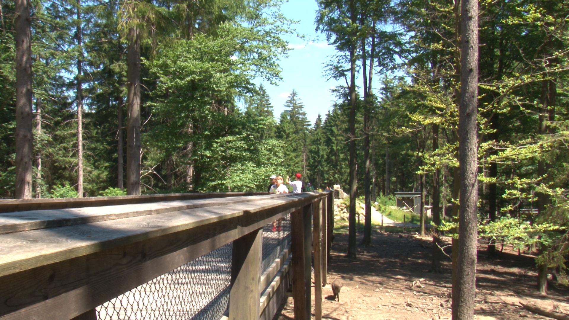 Auf den Brücken über den Gehegen können die Besucher die Tiere bestens beobachten.